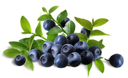 Bilberry as a home remedy for white floaters in the eye