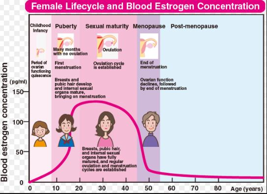 Low Estrogen Causes, Symptoms, Side Effects, Weight Gain ...